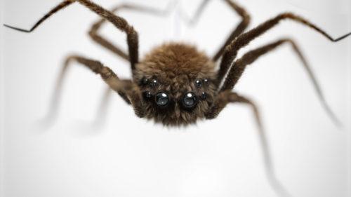 spider_close