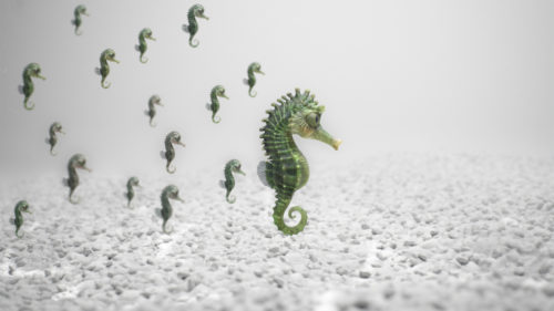seahorse_far2